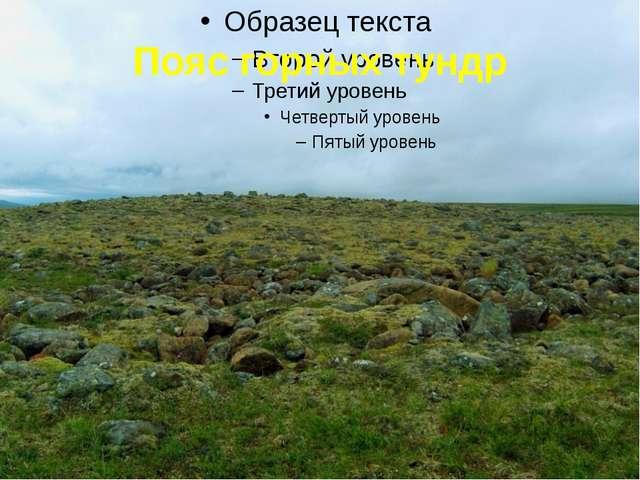 Пояс горных тундр