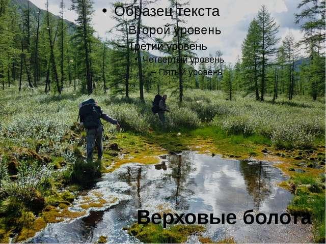 Верховые болота
