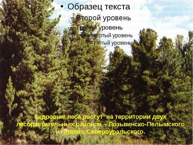 Кедровые леса растут на территории двух лесорастительных районов – Лозьвинско...