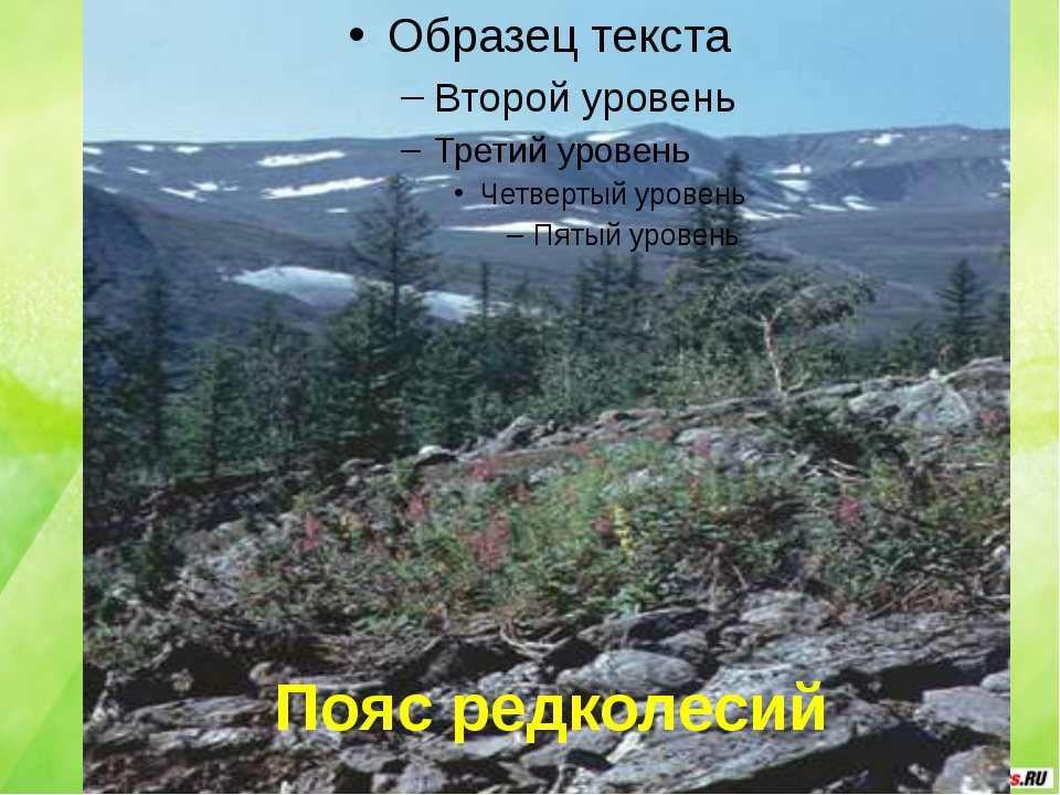 Пояс редколесий
