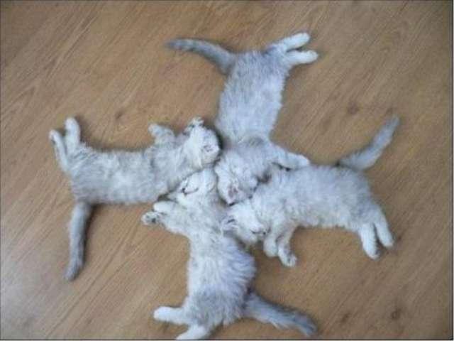 Симметрия животных 