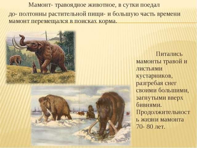 Мамонт- травоядное животное, в сутки поедал до- полтонны растительной пищи-...