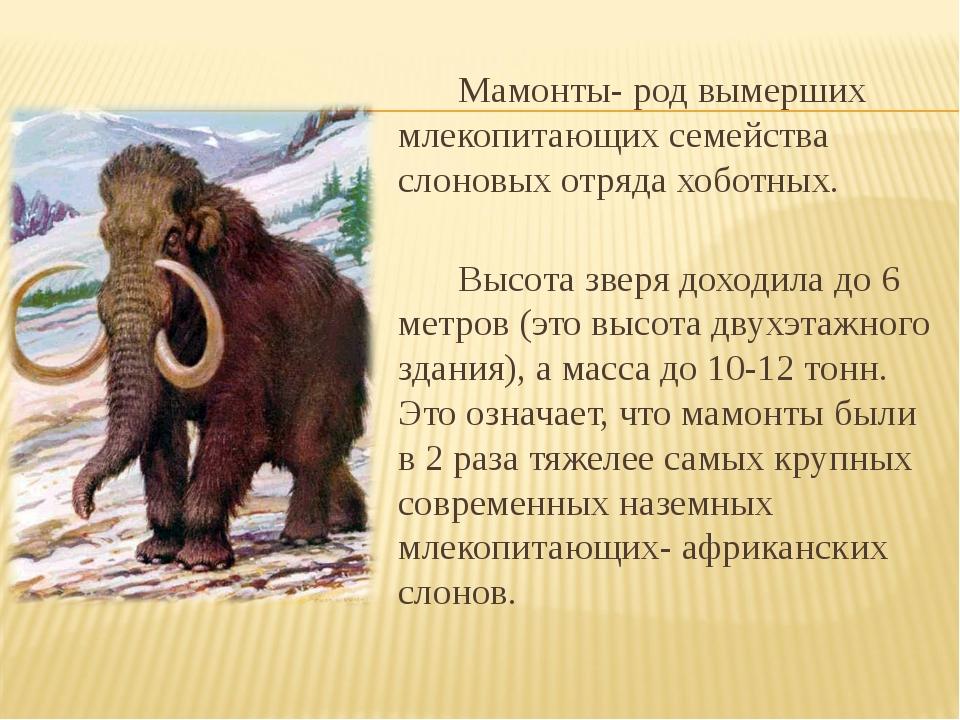 Мамонты- род вымерших млекопитающих семейства слоновых отряда хоботных....