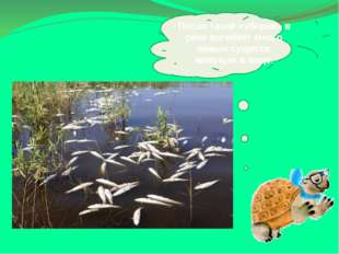 После такой «уборки» в реке погибнет много живых существ, живущих в воде.