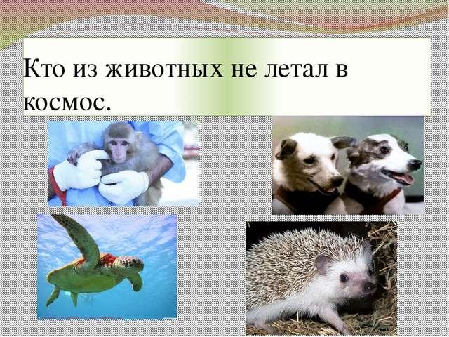 Кто из животных не летал в космос.