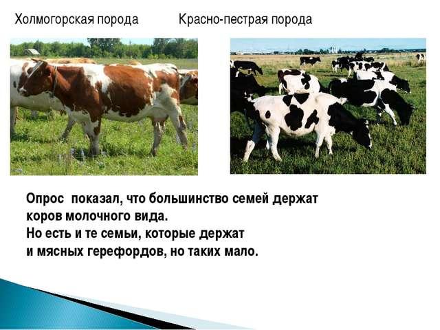 Холмогорская порода Красно-пестрая порода Опрос показал, что большинство сем...