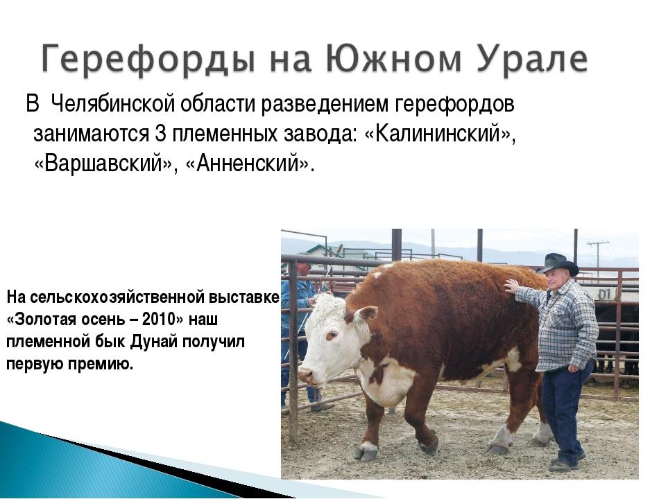 В Челябинской области разведением герефордов занимаются 3 племенных завода:...