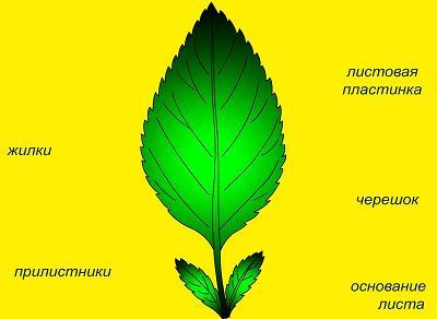 http://tana.ucoz.ru/_ld/9/41955.jpg