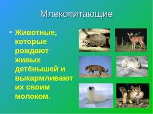Млекопитающие Животные, которые рождают живых детёнышей и выкармливают их сво