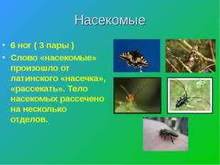 Насекомые 6 ног ( 3 пары ) Слово «насекомые» произошло от латинского «насечка