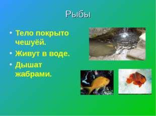 Рыбы Тело покрыто чешуёй. Живут в воде. Дышат жабрами.