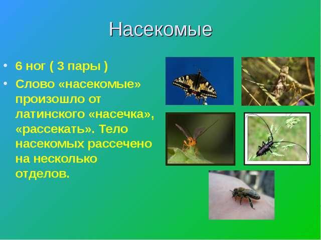 Насекомые 6 ног ( 3 пары ) Слово «насекомые» произошло от латинского «насечка...