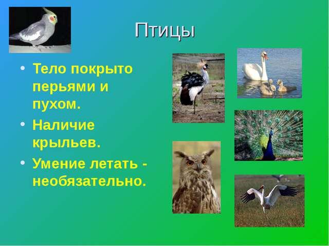 Птицы Тело покрыто перьями и пухом. Наличие крыльев. Умение летать - необязат...