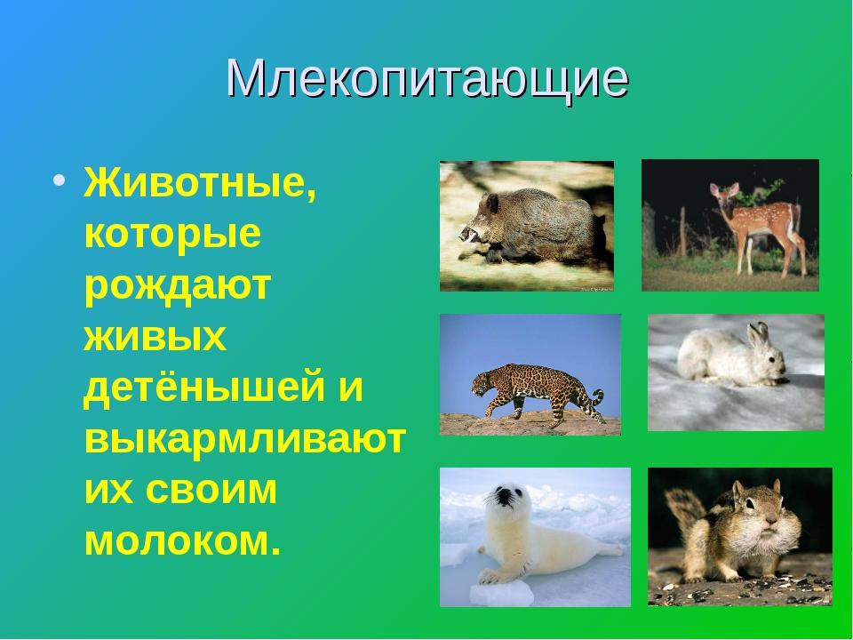 Млекопитающие Животные, которые рождают живых детёнышей и выкармливают их сво...