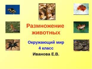 Размножение животных Окружающий мир 4 класс Иванова Е.В.