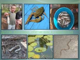 Другие животные, обитающие в озере Белом Наши ребята не только участвовали в