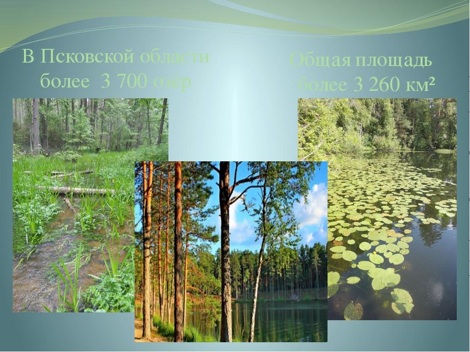 В Псковской области более 3 700 озёр Общая площадь более 3 260 км² Псковская...