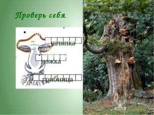 Почему грибы - это «третье царство природы»?