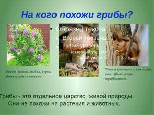 Мы входим с вами в лес! Сколько здесь вокруг чудес! Посмотрели вправо, влево