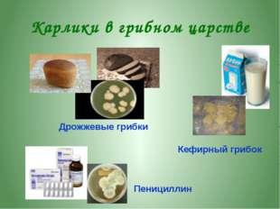 Как и для чего собирают грибы Грибы сушат, варят, солят, маринуют. Дети собир