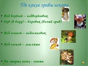 Где какие грибы искать Под берёзой – подберёзовик Дуб (в бору) – боровик (бел
