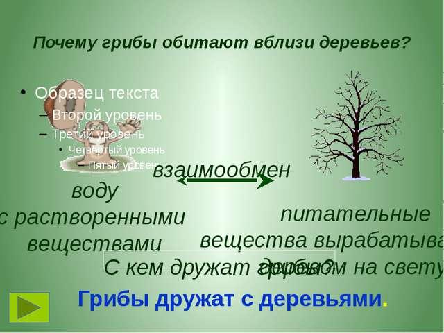 Почему грибы обитают вблизи деревьев? взаимообмен воду с растворенными вещест...