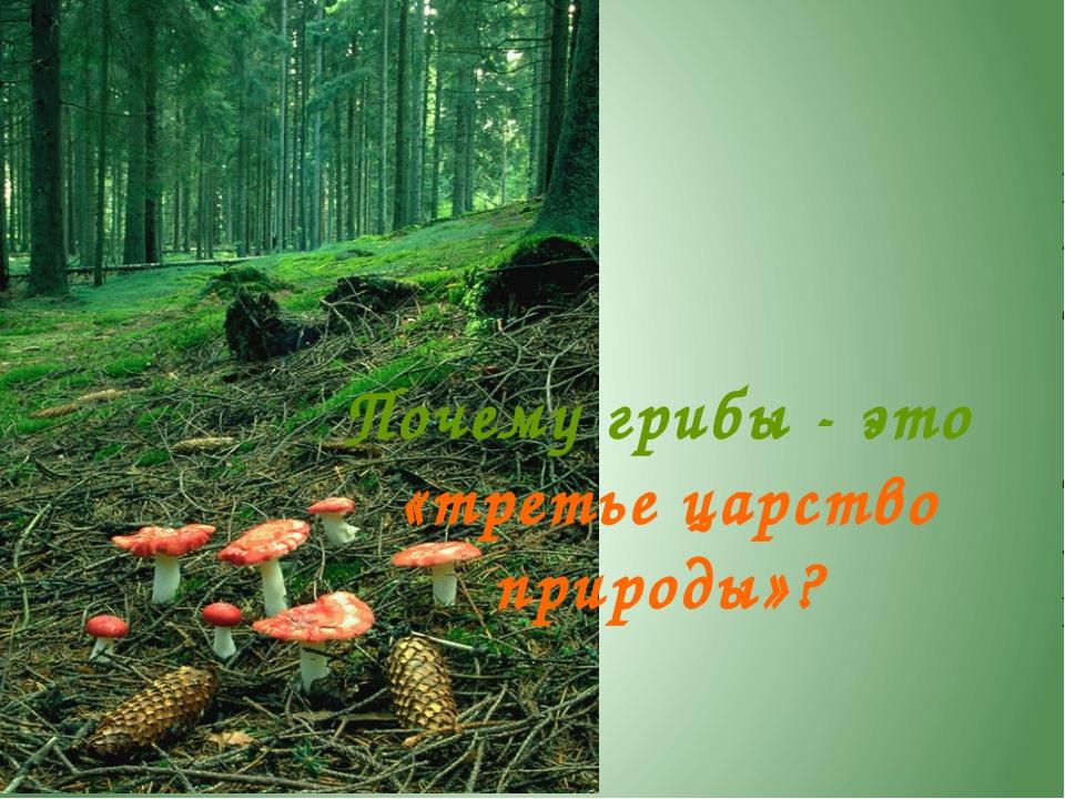 На кого похожи грибы? Грибы - это отдельное царство живой природы. Они не пох...