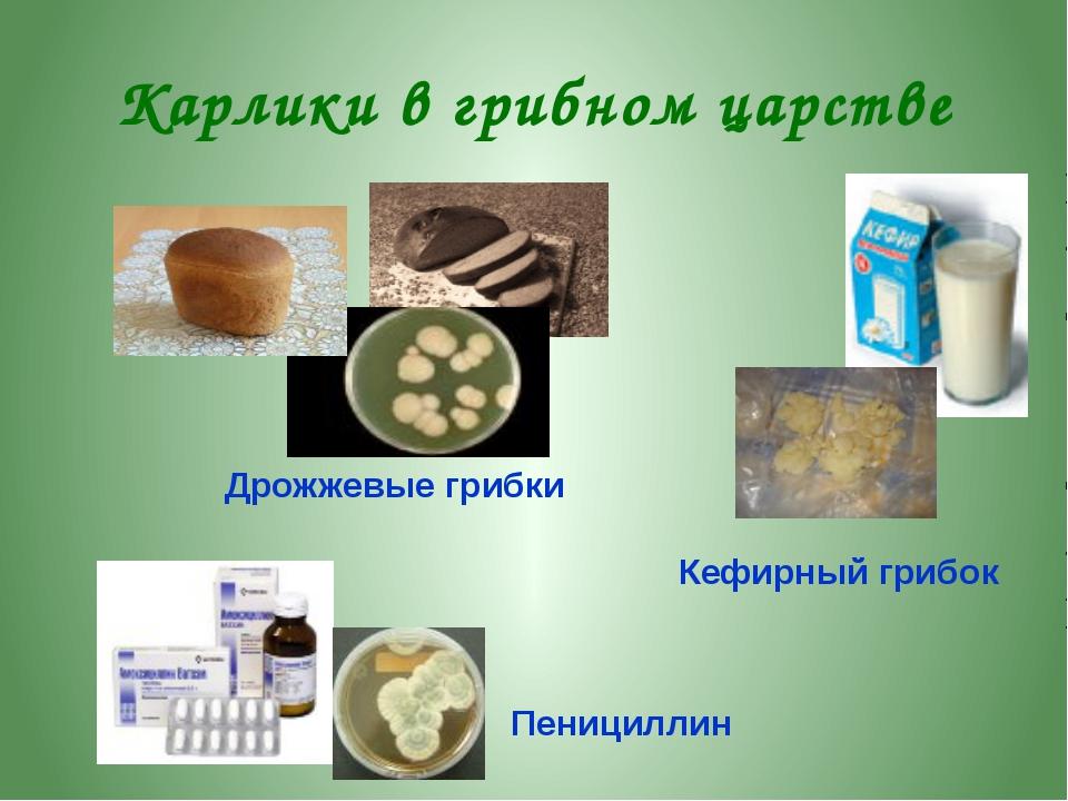 Как и для чего собирают грибы Грибы сушат, варят, солят, маринуют. Дети собир...