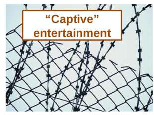 """""""Captive"""" entertainment"""