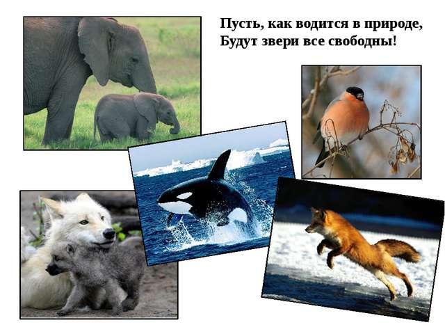 Пусть, как водится в природе, Будут звери все свободны!