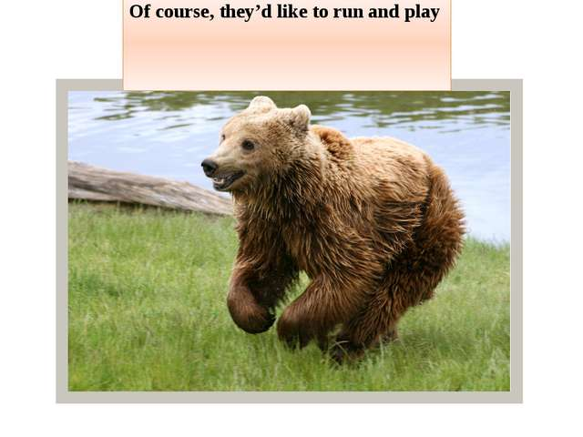 Of course, they'd like to run and play
