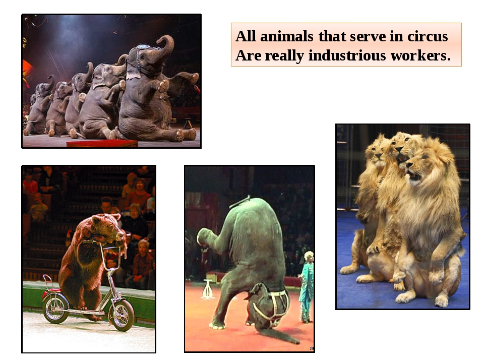All animals that serve in circus Are really industrious workers.