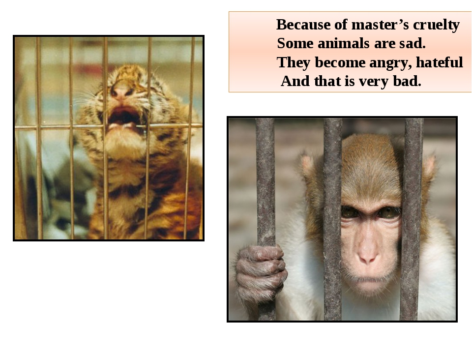 Because of master's cruelty Some animals are sad. They become angry, hateful...