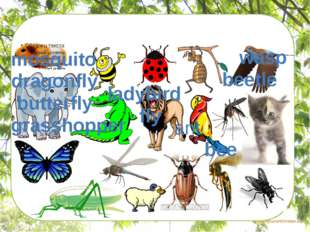 Find the insects mosquito wasp dragonfly butterfly grasshopper ladybird fly