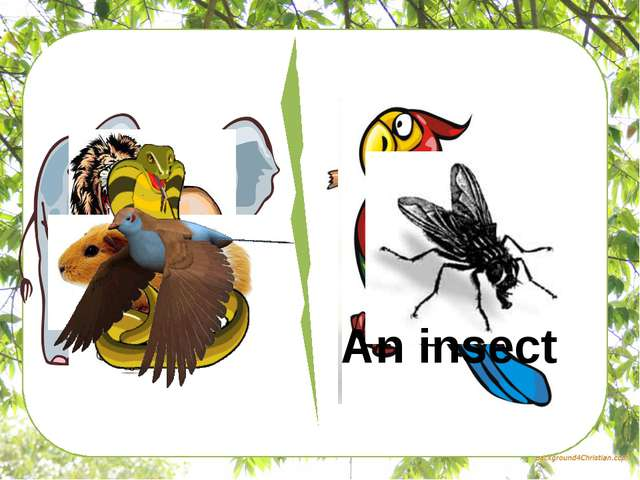 What's the difference? An insect