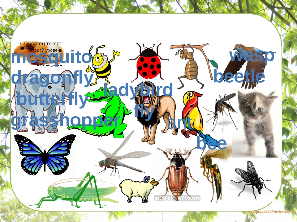 Find the insects mosquito wasp dragonfly butterfly grasshopper ladybird fly...