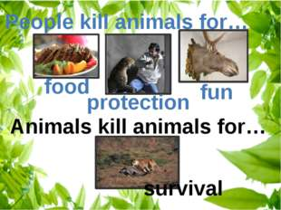 People kill animals for… Animals kill animals for… food protection fun survival