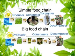 Food chain Producer Consumer Simple food chain Consumer Decomposer Big food c