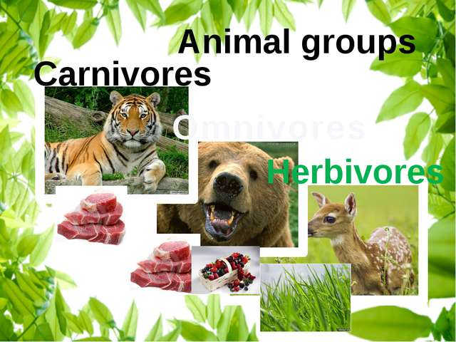 Animal groups Omnivores Carnivores Herbivores