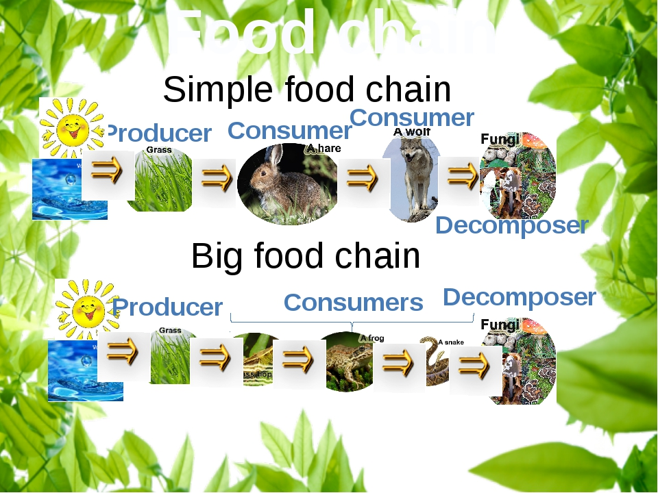 Food chain Producer Consumer Simple food chain Consumer Decomposer Big food c...