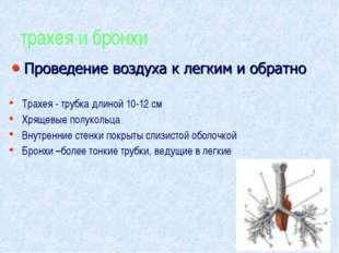 трахея и бронхи Трахея - трубка длиной 10-12 см Хрящевые полукольца Внутренни