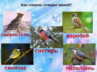 Как помочь птицам зимой? свиристель воробей синичка снегирь поползень