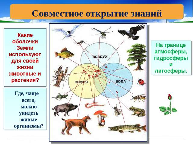 Какие оболочки Земли используют для своей жизни животные и растения? Где, чащ...