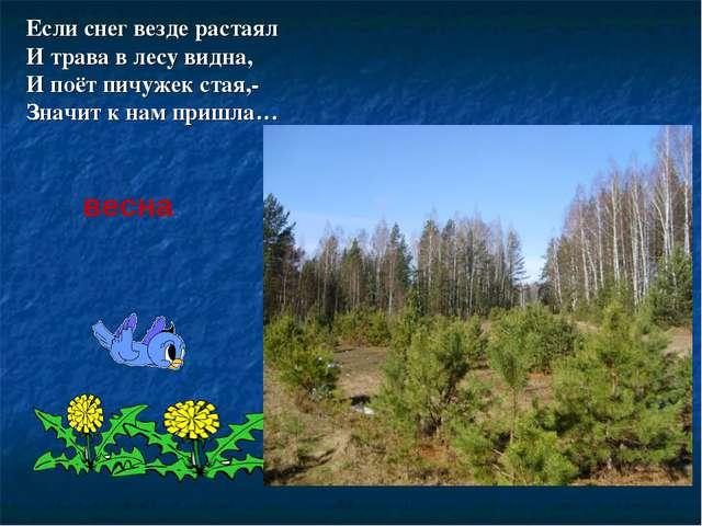 Если снег везде растаял И трава в лесу видна, И поёт пичужек стая,- Значит к...