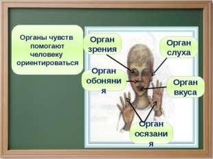 Органы чувств помогают человеку ориентироваться Орган осязания Орган обоняния