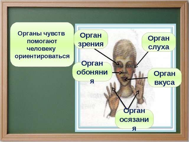 Органы чувств помогают человеку ориентироваться Орган осязания Орган обоняния...