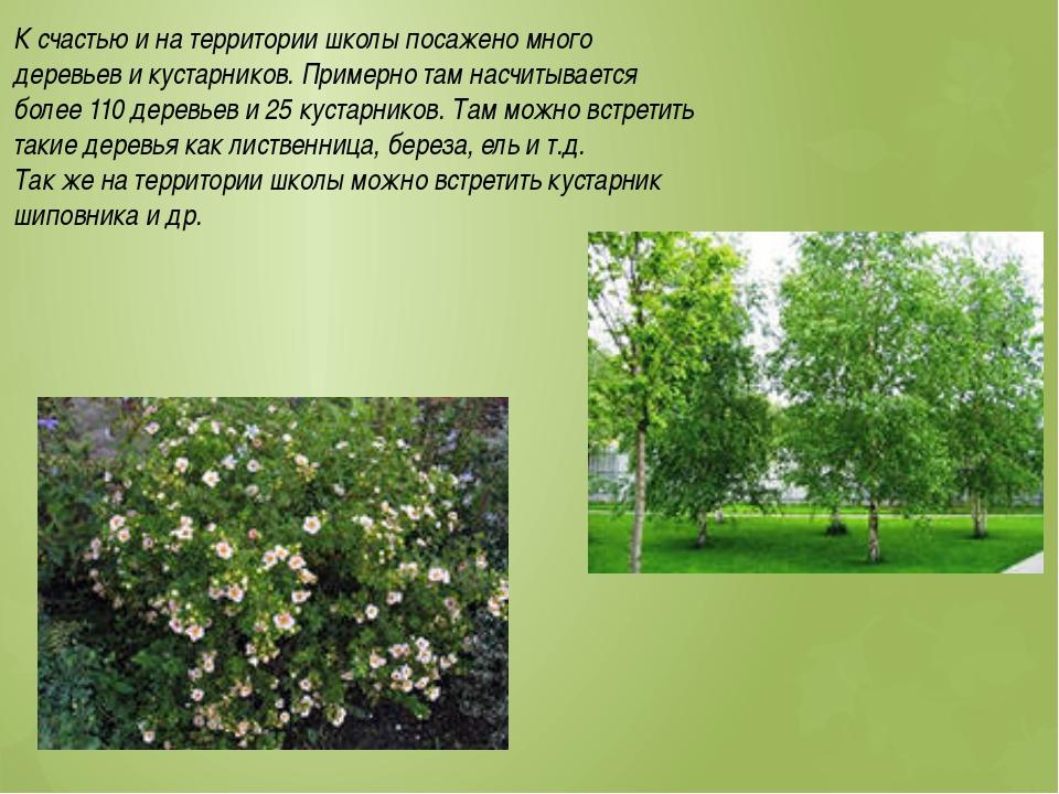К счастью и на территории школы посажено много деревьев и кустарников. Пример...