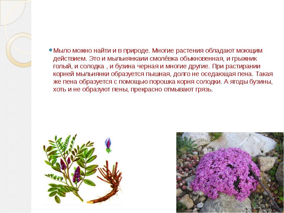 Мыло можно найти и в природе. Многие растения обладают моющим действием. Это...