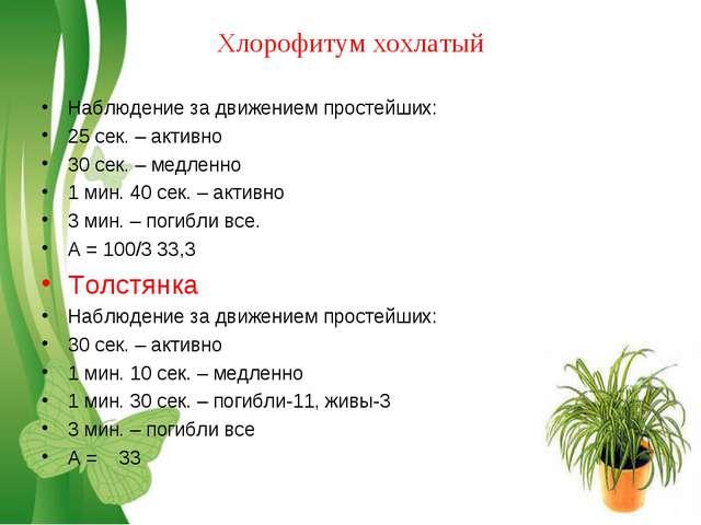 Хлорофитум хохлатый Наблюдение за движением простейших: 25 сек. – активно 30...