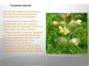 Погремок малый Однолетнее травянистое растение с простым или ветвистым стебле